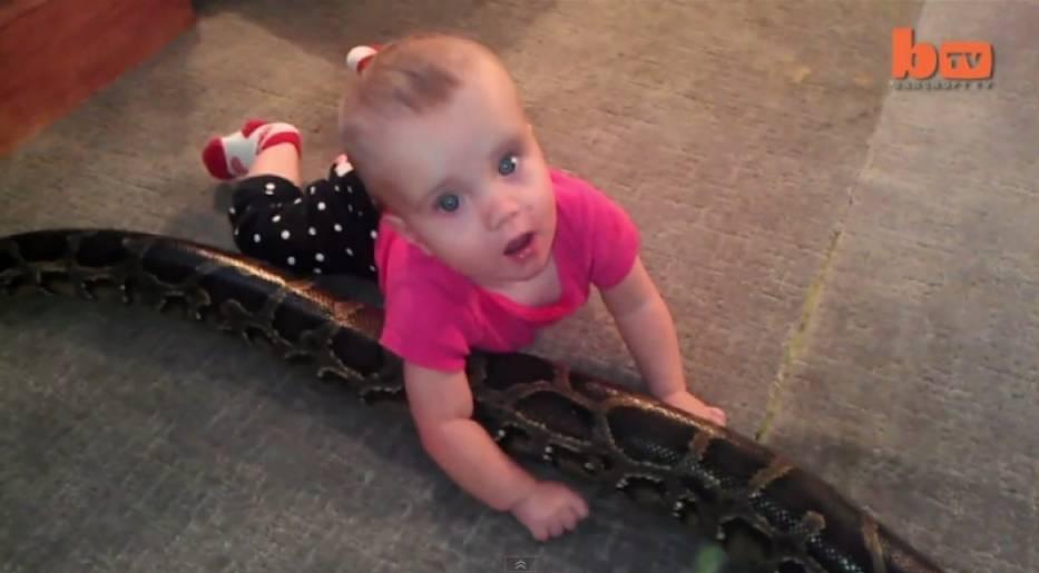 Mała dziewczynka bawi się z pytonem