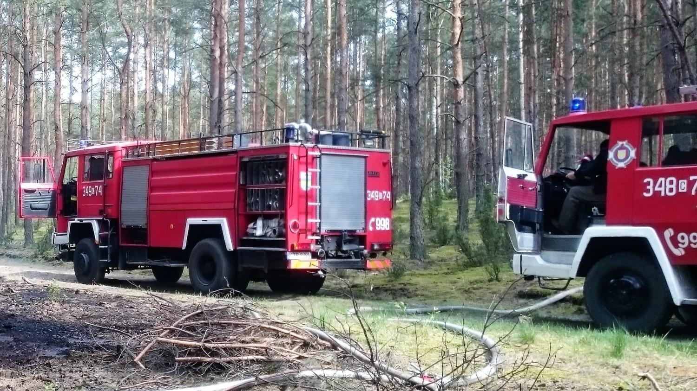 Pożar lasu w Osieku koło Torunia