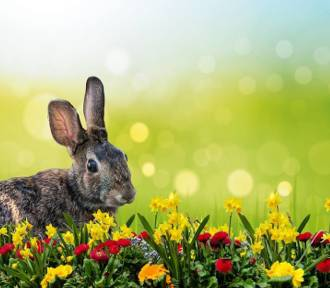 Niesamowite! W Wielkanoc na Dolnym Śląsku nawet 25 st. C! Zobaczcie szczegóły