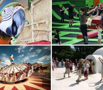 Rollercoastery, papugi, arktyczne igloo. Oto najlepsze atrakcje dla dzieci!