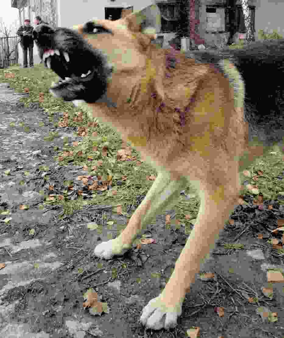 Straż miejska wystawiła 39 mandatów właścicielom psów