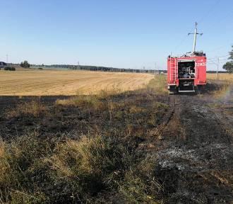 Ścierniska i połacie suchej trawy nadal płoną - gasili je strażacy z Mikołajek Pom.