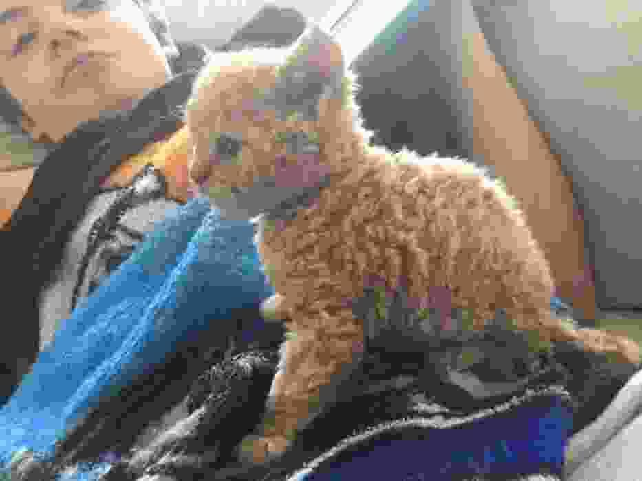 Lubicie koty? Gwarantujemy, że takich jeszcze nie widzieliście!