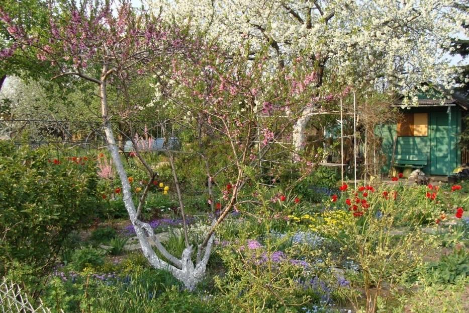 Kwiecień to czas wielu prac w ogrodzie