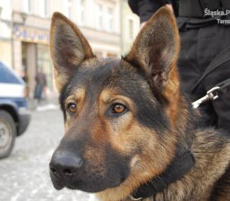 Tarnowskie Góry: Policyjne psy są niezawodne