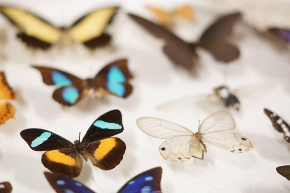 Muzeum Motyli W Bochni Zdjęcia Naszemiastopl