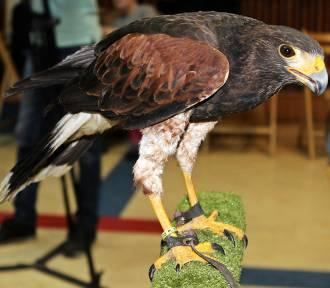 Ptaki drapieżne w Domu Kultury Janowo