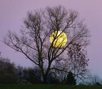 Kalendarz księżycowy prac w ogrodzie na marzec 2020