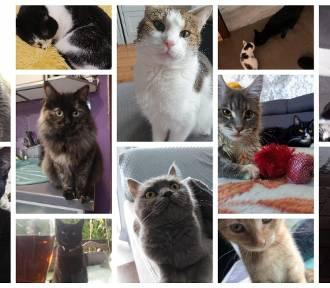 Światowy Dzień Kota 2021: Zobaczcie zdjęcia kotów z powiatu międzychodzkiego [FOT]