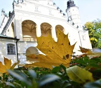 Złota polska jesień w Ogrodzie Zmysłów w Poddębicach. Jest pięknie. Zobacz ZDJĘCIA