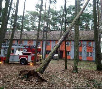Strażacy interweniowali w związku z pochylonymi drzewami! [ZDJĘCIA]
