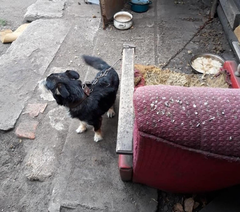 W takich warunkach trzymane były trzy psy, które odebrali inspektorzy OTOZ Animals z jednej z podbydgoskich wsi