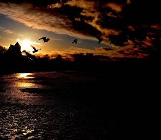 Niezwykłe zdjęcia z półwyspu - piękno Bałtyku w kadrze [GALERIA]