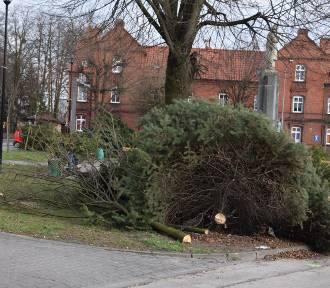 Starogard Gd. Drzewa poszły pod topór. Jaki był powód?  ZDJĘCIA