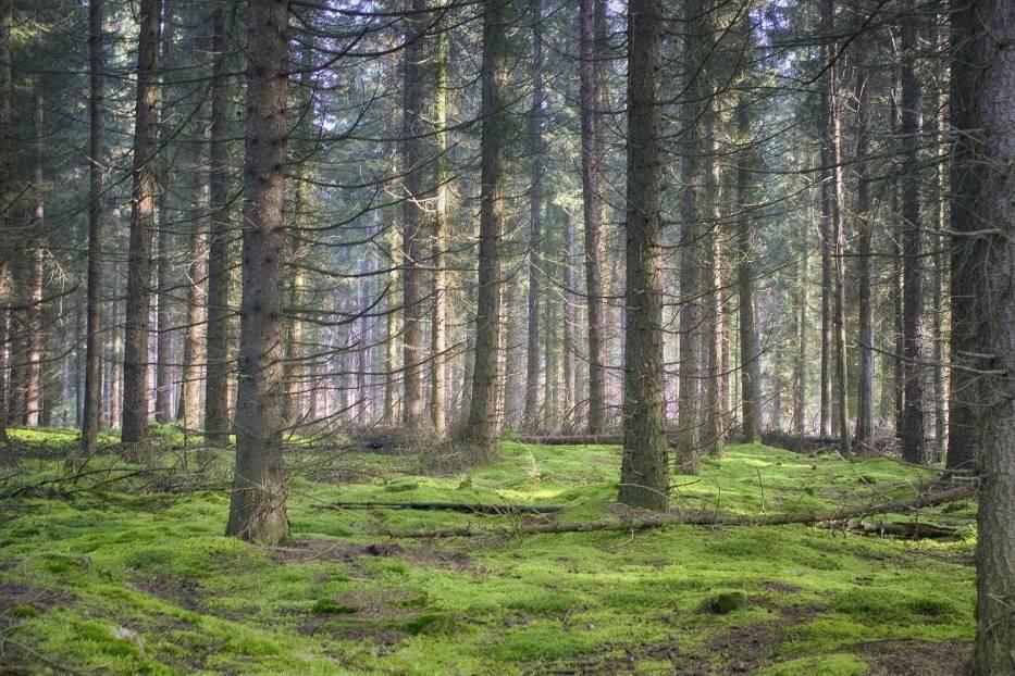 Arborysta