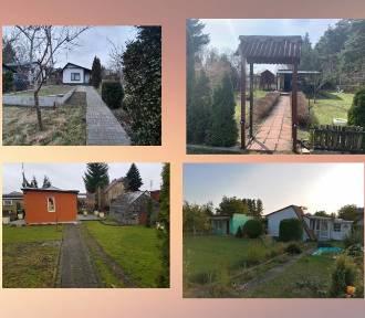 Ogródki działkowe na sprzedaż w Brodnicy. Zobacz, ile kosztują!
