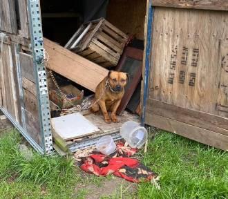 DIOZ: gnębili psa, a gdy nie mogli sobie z nim poradzić- porzucili go bez picia i jedzenia! [ZDJĘCIA]