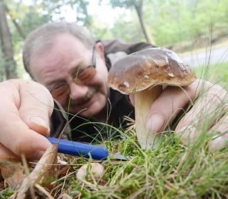 Dolny Śląsk. Zobacz, gdzie już są grzyby! (MIEJSCA)