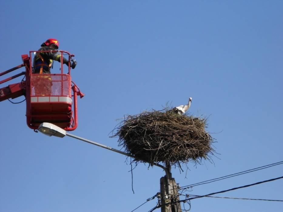 Strażacy uratowali bociana