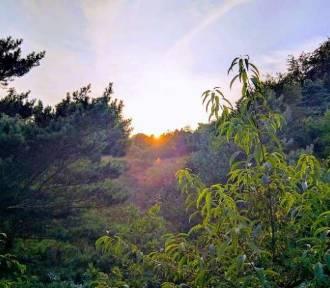 """Konkurs fotograficzny """"Leśne fascynacje"""" Hufca Pracy 5-15 w Zduńskiej Woli [zdjęcia i wyniki]"""