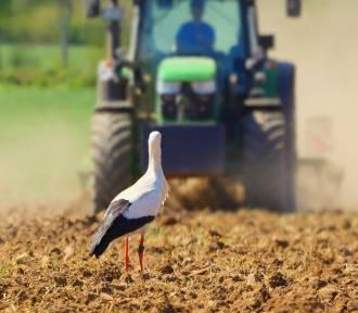 Rolnicy to prawie milionerzy. Tyle są warte ich gospodarstwa w Lubuskiem!