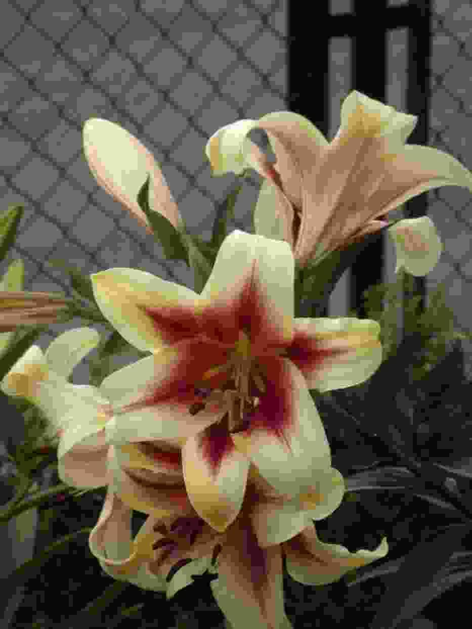 kwiat ciepłolubny