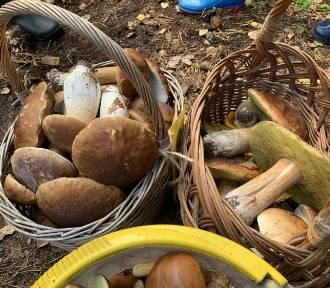 Zebrali 130 kg grzybów. Wielkie grzybobranie w Puszczy Goleniowskiej