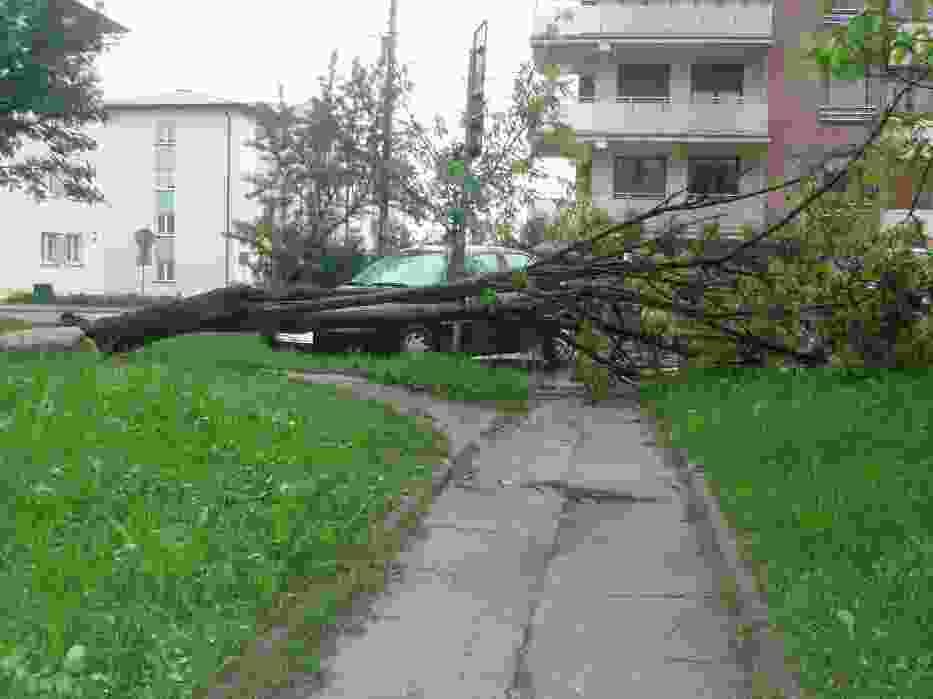 Powalone drzewo przy ul