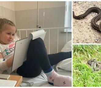 Wałbrzych. 4-letnią dziewczynkę na łące ukąsiła żmija. Uważajcie! - apeluje jej mama