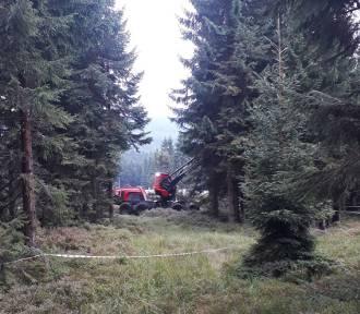 Wycinają drzewa na Polanie Jakuszyckiej! To tutaj będzie Dolnośląskie Centrum Sportów! [FILM,ZDJĘCIA]