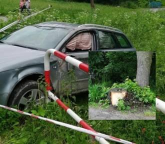 Pień przy drodze. Rodzina mogła zginąć przez zaniedbanie?