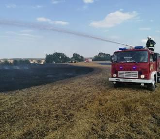 Strażacy gasili pożar ścierniska w okolicach Dąbrówki Pruskiej - zachowajmy ostrożność! [ZDJĘCIA]