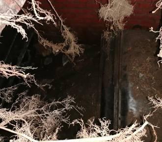 Tajemnicze odkrycie w Dąbiu. Osunęła się ziemia. Pod nią był grobowiec