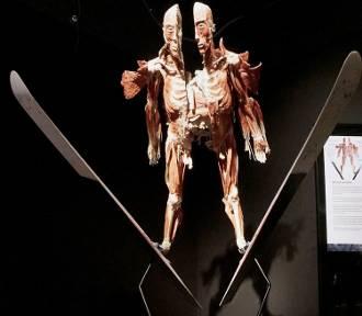 Wystawa Body Worlds & The Cycle of Life w Porcie Łódź dostępna do 2 lipca [ZDJĘCIA]