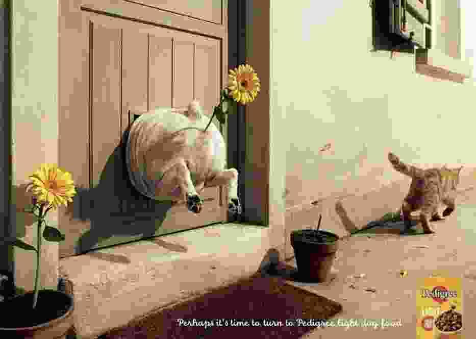 Najlepsze reklamy: Pedigree, zdrowe jedzenie dla twojego psa