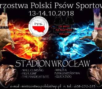 Targi Animal Wroclove już w ten weekend na Stadionie Wrocław [HARMONOGRAM TARGÓW]