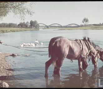 Most Warszawski w Łowiczu zniknął z krajobrazu miasta kilkanaście lat temu [Zdjęcia]