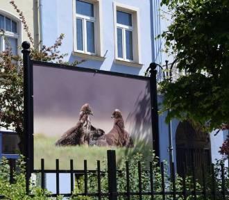 Dwie wystawy jednocześnie można oglądać w centrum Nowej Soli