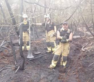 Pożar lasu w Helu (24.06.2019)   ZDJĘCIA