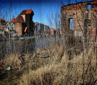 Wyspa Spichrzów 5 lat temu. Ruiny i zieleń. Pamiętacie?