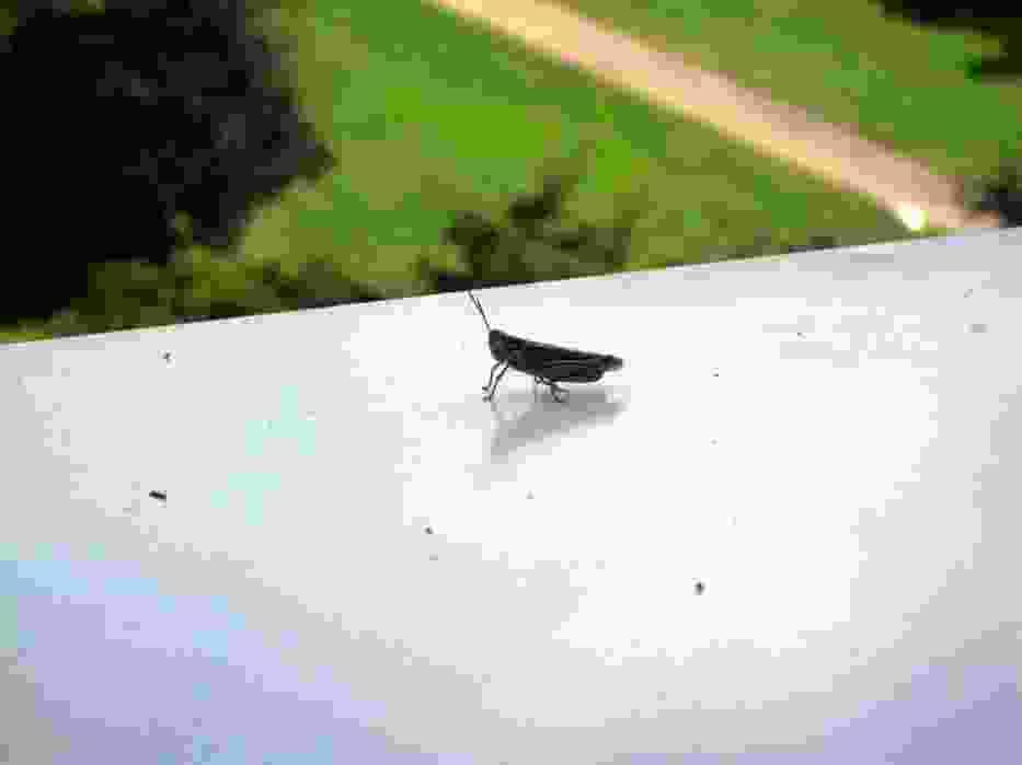 Ciekawski owad na mym parapecie