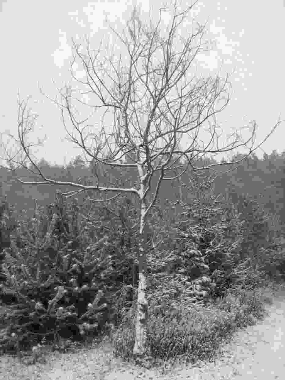 Pierwszy śnieg - spacer w stronę lasu