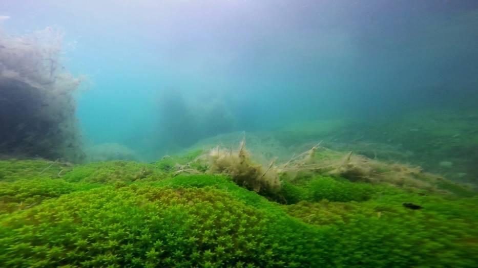 Podwodne zdjęcia