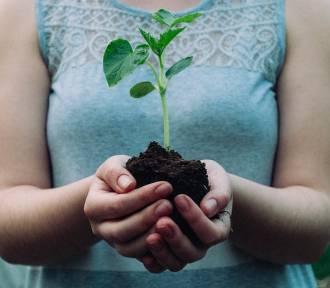 Bialskie Centrum Kultury organizuje ekologiczny konkurs