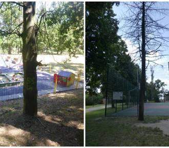 Wycinka uschniętych drzew w Parku im. Błachańca. Miasto zasadzi nowe drzewa