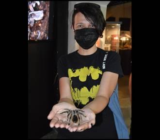 """Weź ptasznika na ręce i zobacz """"czarną wdowę"""". Wystawa w Nysie otwarta jeszcze kilka dni"""