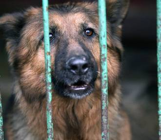 Te wspaniałe psy z legnickiego schroniska szukają domu. Pomożesz? [ZDJĘCIA - grudzień 2018]