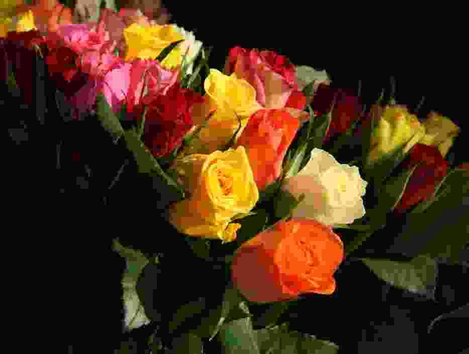 Imieniny 16 lutego obchodzi: Danuta i Julianna