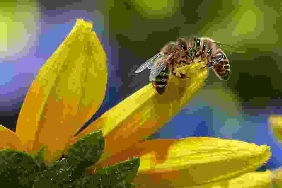 Olsztyn jest przyjazny pszczołom