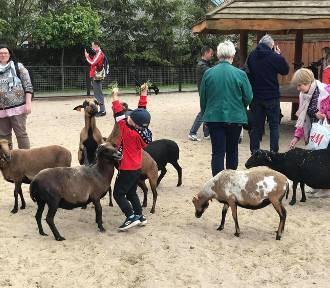 Mieszkańcy regionu tłumnie odwiedzili ZOO Safari w Borysewie [FOTO]